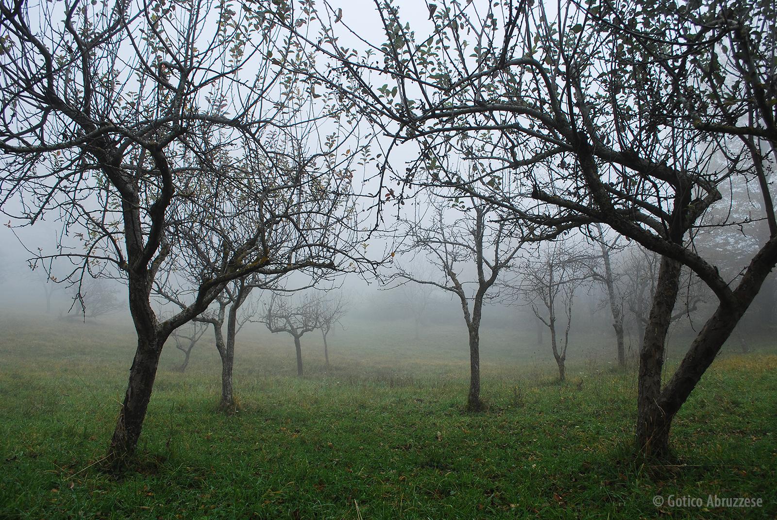 Il Bosco dei Limmari, luogo dell'eccidio.